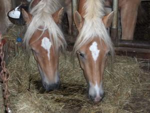 ernaehrungstherapie - pferdeheilpraxis nill