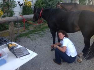 prognosmessung - Pferdeheilpraxis Nill