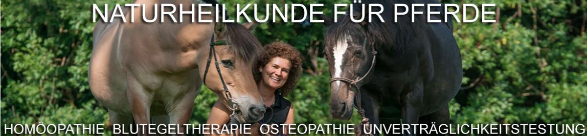 Pferdeheilpraxis